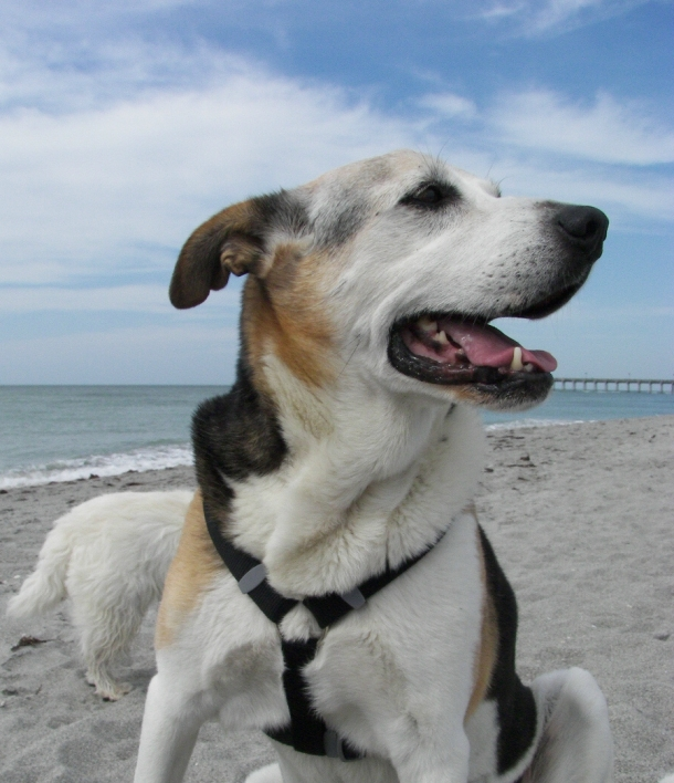 Patch at Brohard Paws Beach, Venice, Florida